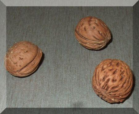 ÖKO mágnes (Mini barackmag neodym mágnessel)